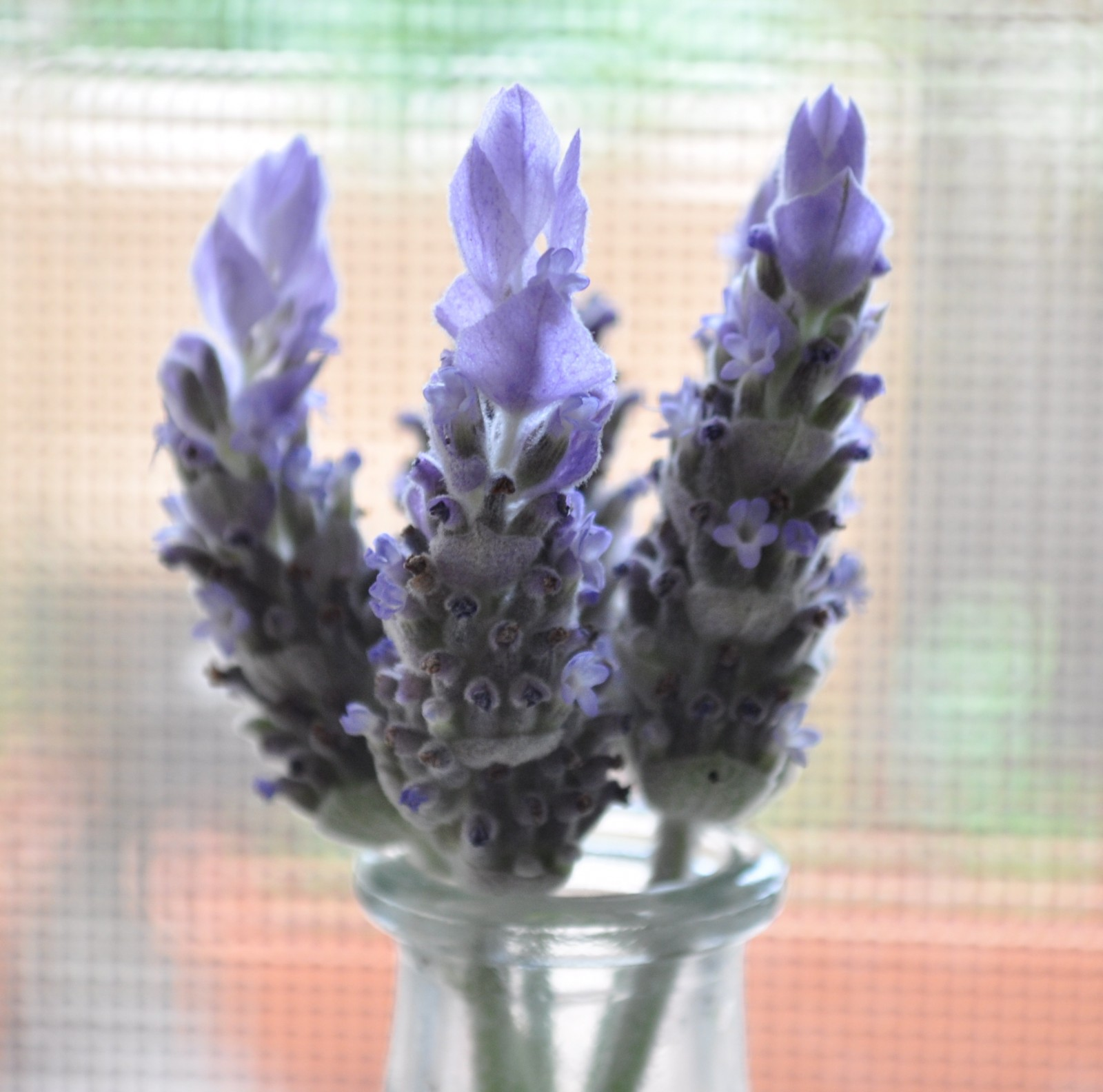 Lavendar