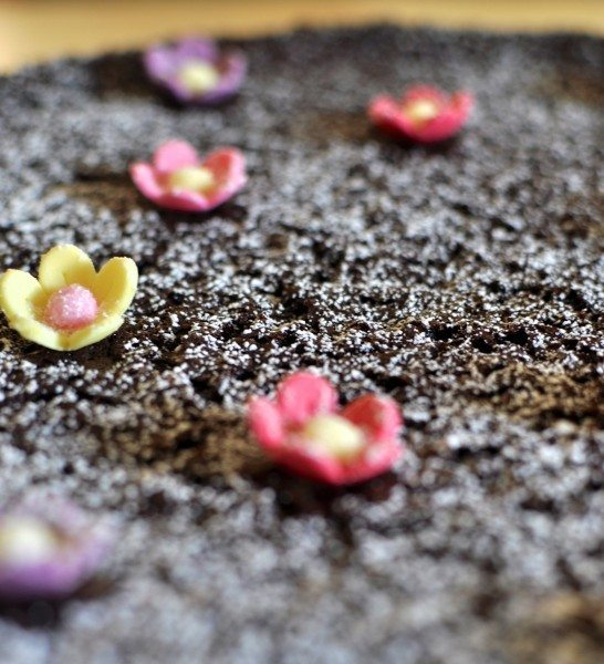 Nigella's chocolate olive oil cake