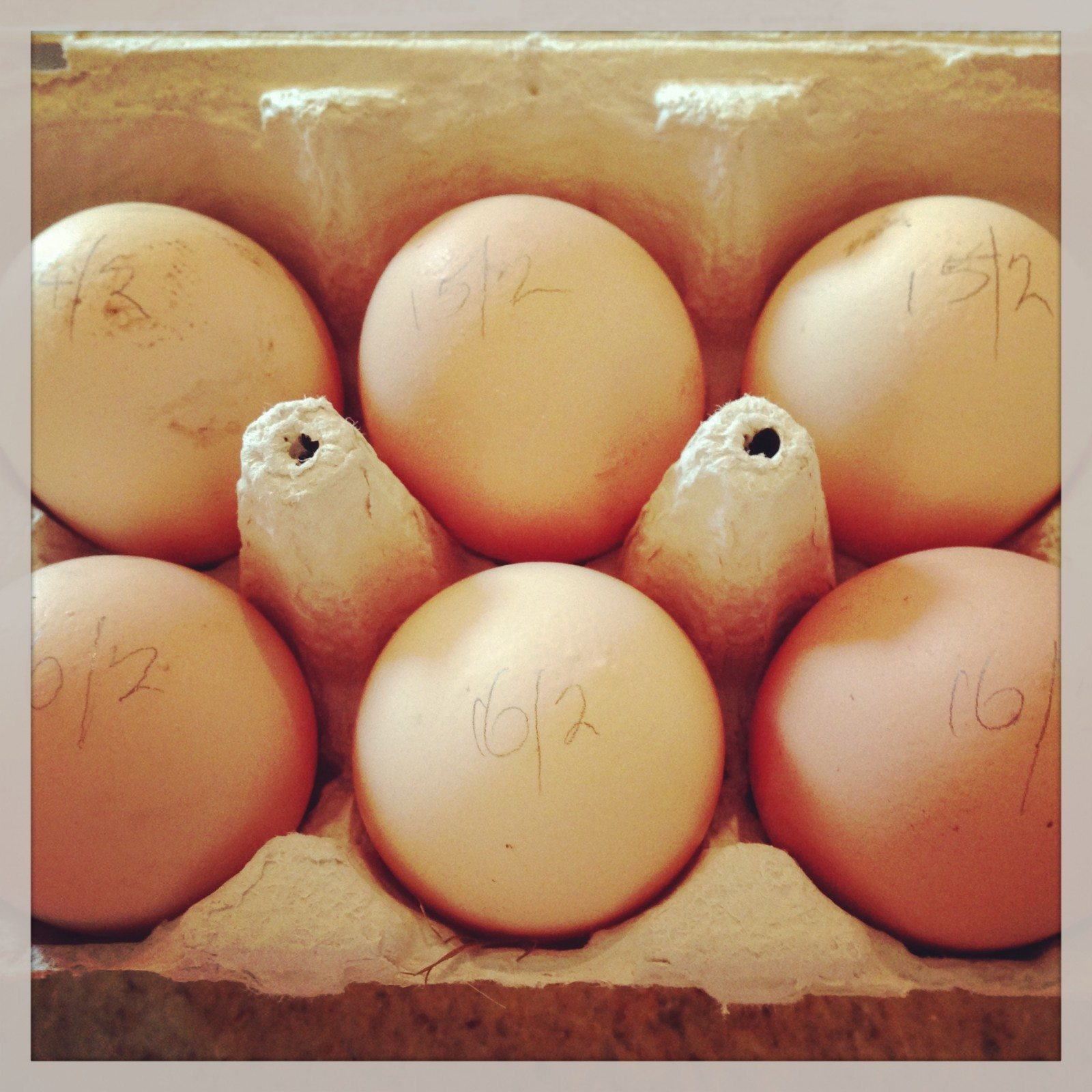 Eggs from my friend's mum's chickens